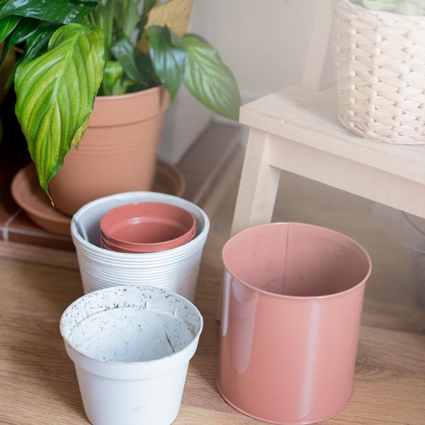 Zero Waste Eco Friendly Indoor Gardening